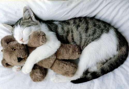 Stuffed animals/ plush toys ^_^Sleep Beautiful, Cat, Sleepy Time, Bears Hug, Tar Heels, Teddy Bears, Kittens, Kitty, Stuffed Animal