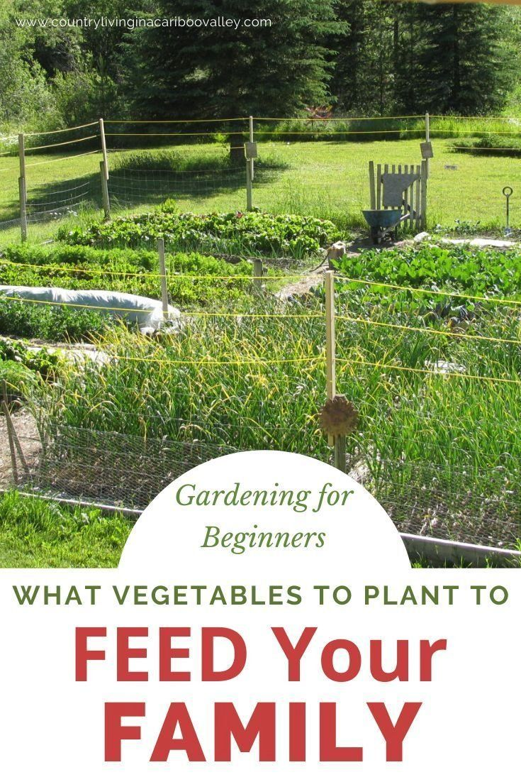 Planning Your Vegetable Garden How To Have Enough Food For A Year Modern Design Vegetable Garden Planning Gardening For Beginners When To Plant Vegetables