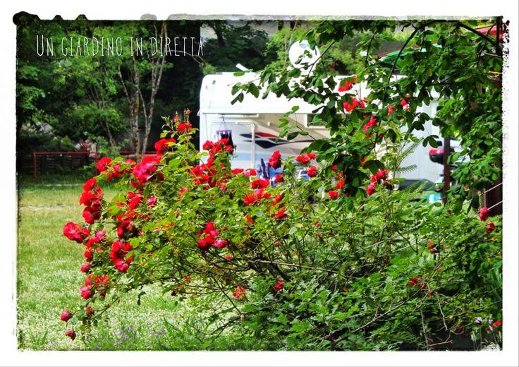 Il campeggio Funivia del Gran Sasso, un altro giardino di montagna
