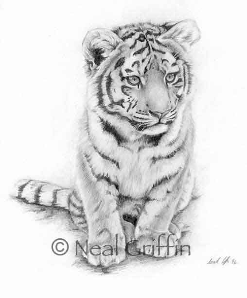 tiger cub drawing - Google Search