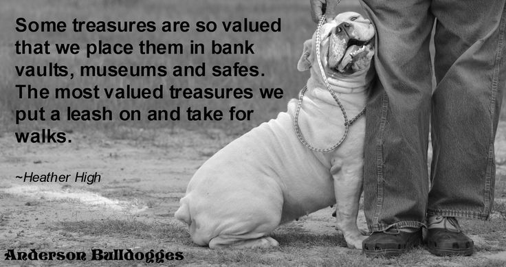 Otis,  My Olde English Bulldogge is my treasure :D