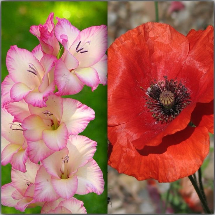 April Birth Flower Color Meanings: 1000+ Ideas About Birthday Month Flowers On Pinterest