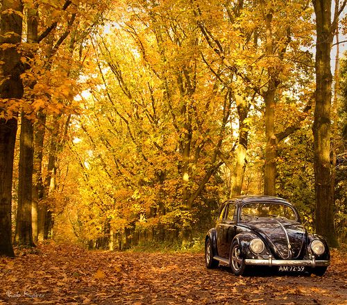 Volkswagen Beetle Retro 4k Hd Wallpaper: Autumn VW Beetle