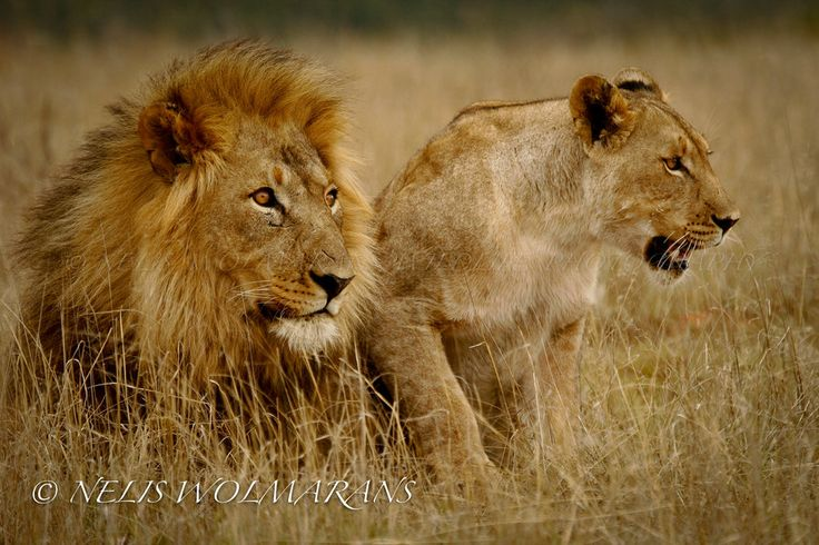 Father and Daughter by Nelis Wolmarans on 500px
