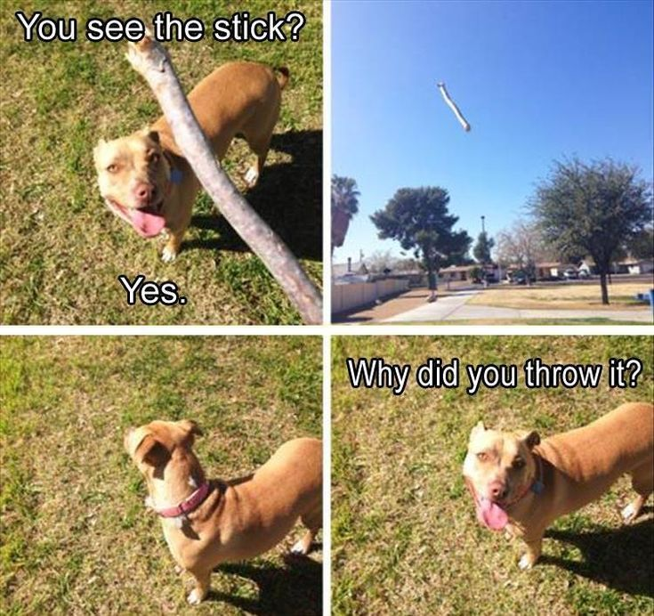 Funny Animal Picture Dump 20 Pics