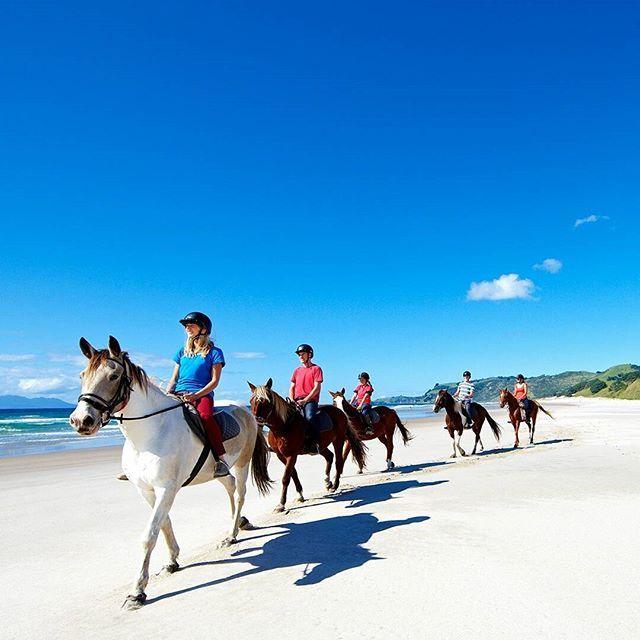 No filter needed for Pakiri Beach just north of Auckland! Beautiful surf, sand dunes and sun - worth a trip to unwind. . . . #sea #beach #summer #sun #tan #sand #swim #surf #nzmustdo #mustdoNZ #island #hike #trekking #hiking #campervan #backpacking #nature #adventure #native #notatourist #backpackingadventures #backpackingaddicts #campervan #camping #budgettravel #lonelyplanet #travelonashoestring #vanlife #homeiswhereyouparkit