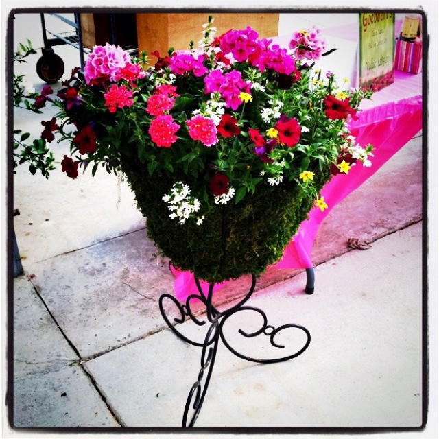 We love this urn that we planted for our Pink Day last year!Plants Ideas