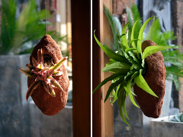 Cocoon Hanging Planters With Pre Planted Bromeliad Amp Bird