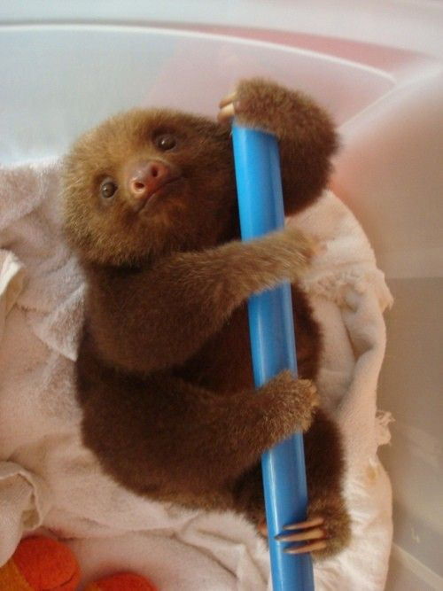 Sloth - Click image to find more Pets Pinterest pins
