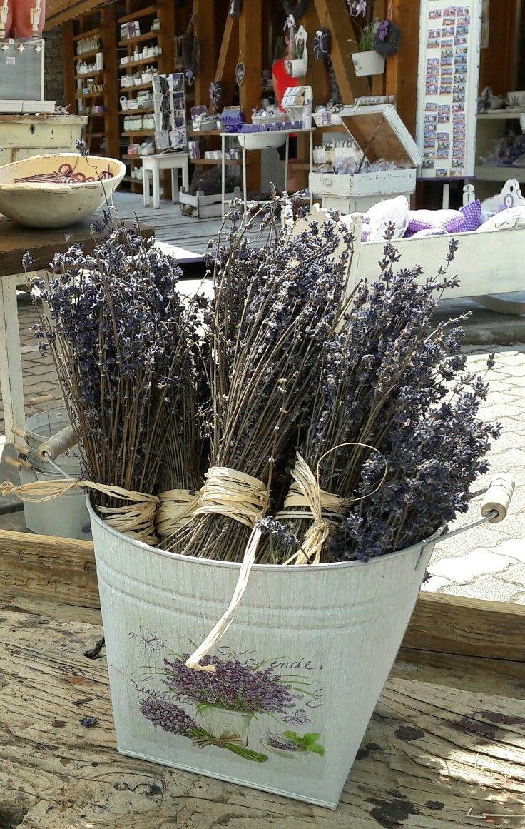 Lavender in Tihany @ Lake Balaton