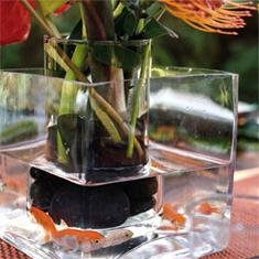 Go Fish  For an added and easy-to-accomplish dose of drama, treat your guests to a peek at goldfish darting about the center of the table. To make these centerpieces, root birds of paradise, anthurium, and aspidistra in river rocks and place the container inside a separate square vase; add water to both vessels, along with a few brightly hued fish in the outer container.