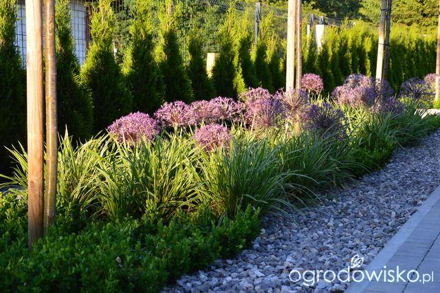 Zielonym od linijki - ogród Ivony - strona 312 - Forum ogrodnicze - Ogrodowisko