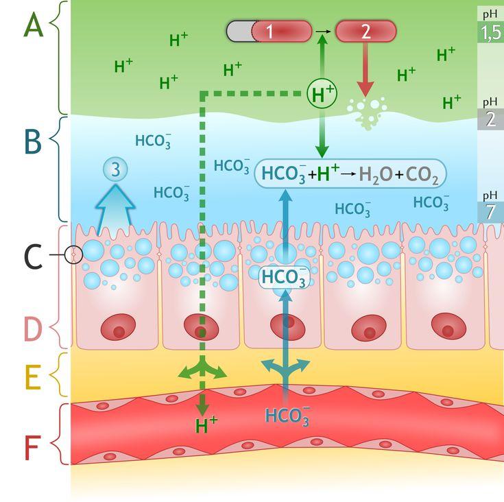 Benefits of Drinking Ionized Alkaline Water