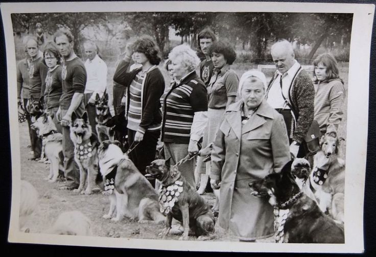 1970's Russia Soviet Latvia Photo German Shepherds Awards Other Dogs Exhibition