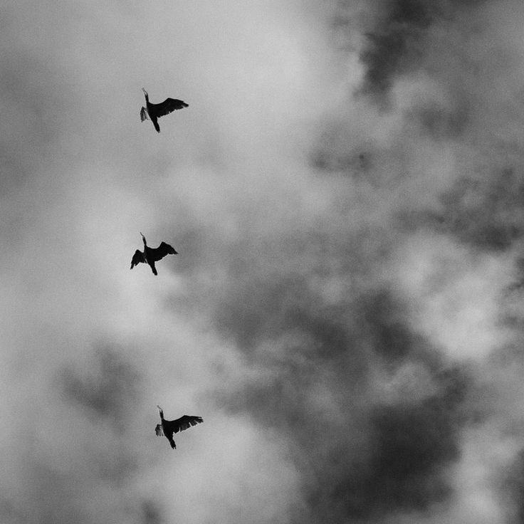 Cormorants — MARIUS TANEF