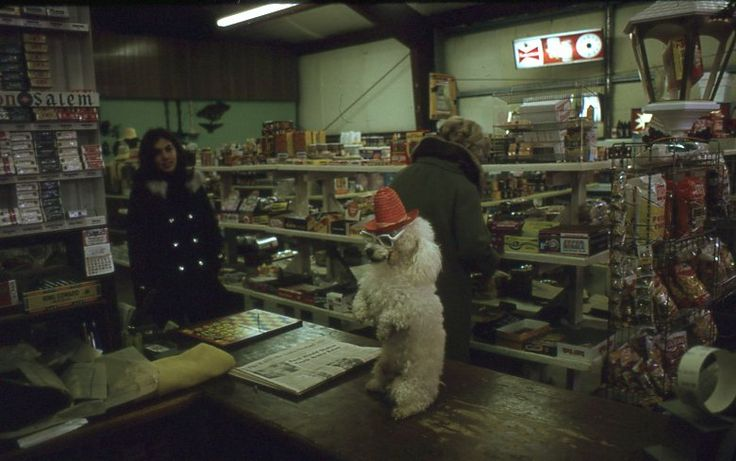 Amateur shot slide.  Dressed up dog in a store in Sacramento, California.  1970s