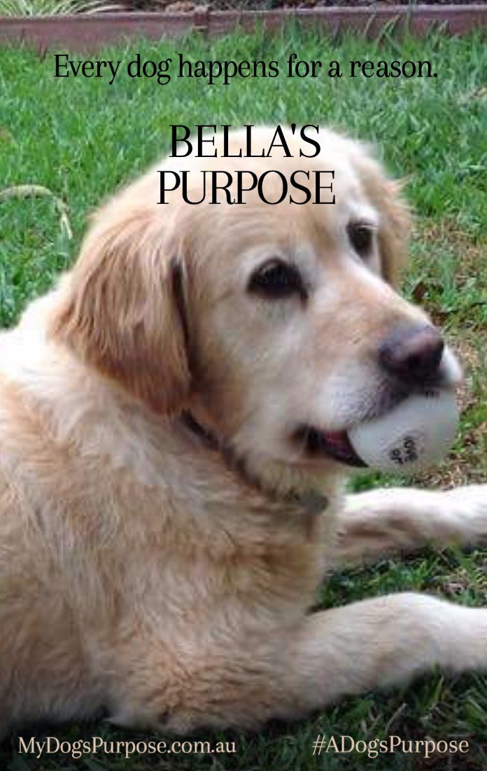Think your pup's a star? Turn your BFFF (Best Furry Friend Forever) into a Jennifer Pawrence or Bark Ruffalo with the A DOG'S PURPOSE Poster Generator!   A DOG'S PURPOSE - In Cinemas May 4