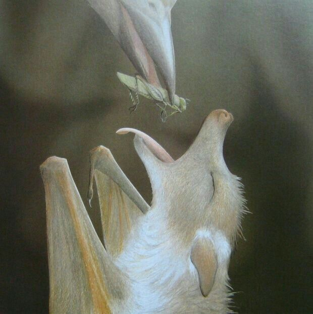 Bird feeding albino bat.