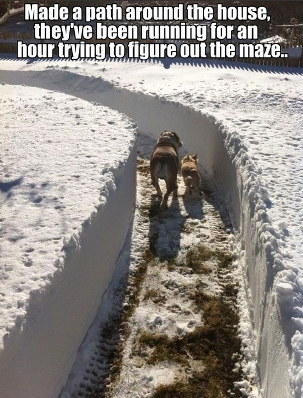 """""""Made a path around the house, they've been running for an hour trying to figure out the maze."""" ~ Dog Shaming shame"""