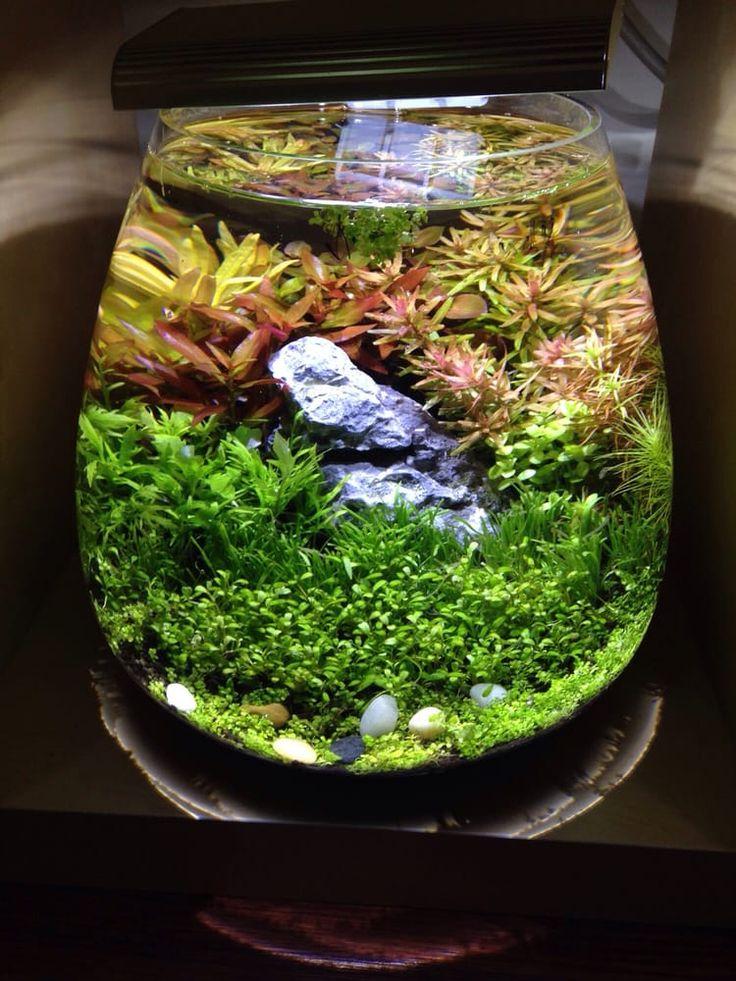 167 Best Planted Nano Aquariums Images On Pinterest