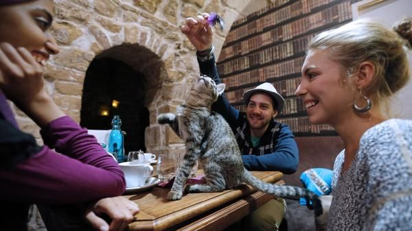 Parisian cafes: Now with cats?