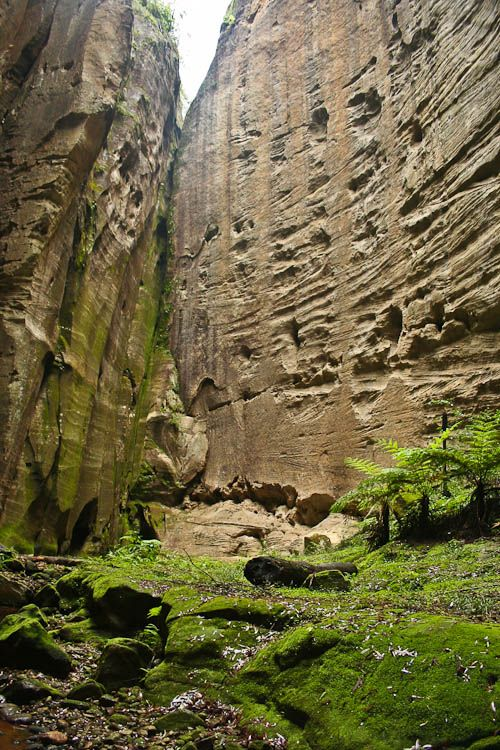 The Amphitheatre Carnarvon Gorge Queensland Australia