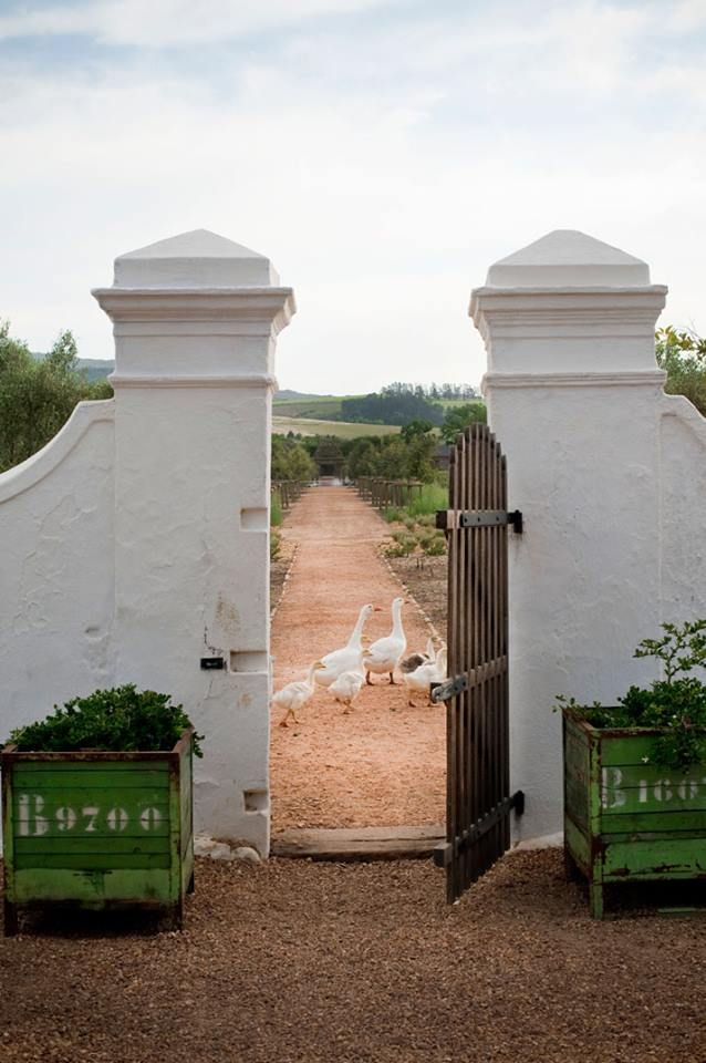 """Babylonstoren Organic Farm and Hotel, South Africa ... A unique 12 room hotel embracing the """"Farm to Table"""" experience, raising all their own organic veggies, birds/eggs and livestock. Guest can pluck their own veggies and cook in their own contemporary kitchen of their bungalow, or let the Chef's """"pick and prepare"""" at the restaurant."""