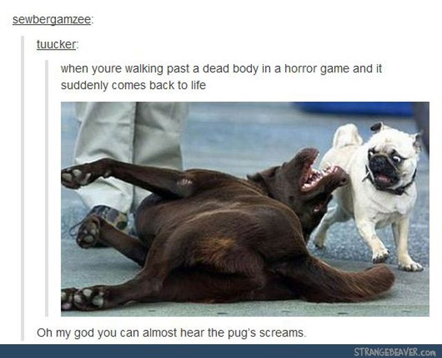 Funny tumblr post <<< dogs, horror game, dead body suddenly comes back to life, face, FAVORITE, <<< I always imagine it sounds something like this https://www.youtube.com/watch?v=XDHIpzRWaNc        XD