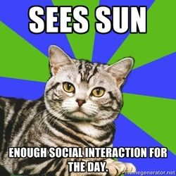 xD these introvert cat memes are the best