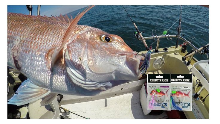 Fishing Dophins Direct Me Red Snapper Appear On My Sounder Catching Fish