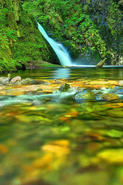 Goldstream Park, Vancouver Island, BC | by Ireena Eleonora Worthy, via Flickr