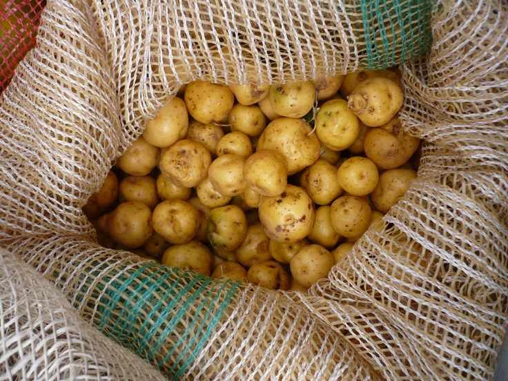 favourite vegetable potato We all have our favorite potato salad,  a variety of vegetables marry well with the potatoes in this potato salad the vegetables include carrots,.