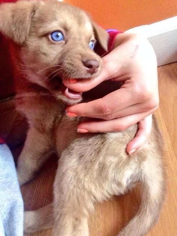Rare species of dog called Nash Grier. Via Tumblr