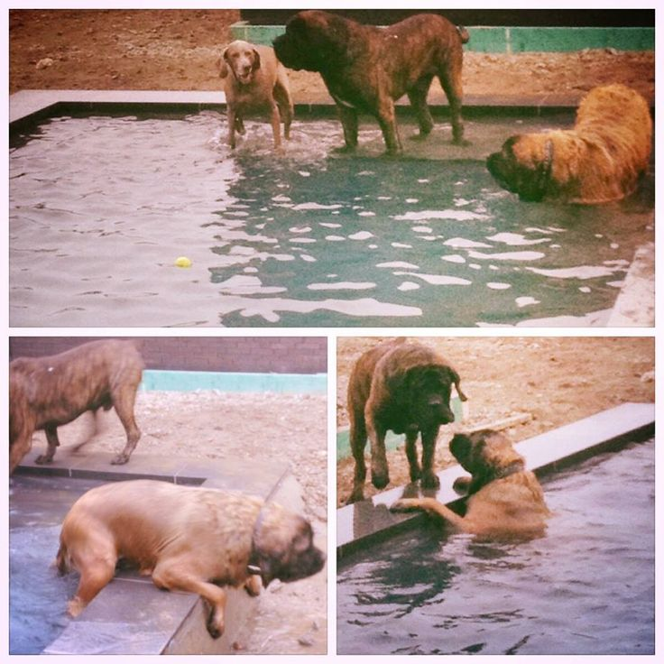 Dog Party in een net aangelegde Cube van Leisure Pools #Funny Els Van Eetvelde