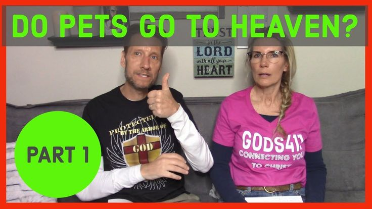 Do Our Pets Go To Heaven? Say hi, Laughter, Youtube