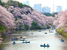 Best cherry blossom spots in Tokyo (Tokyo Hanami Spots)