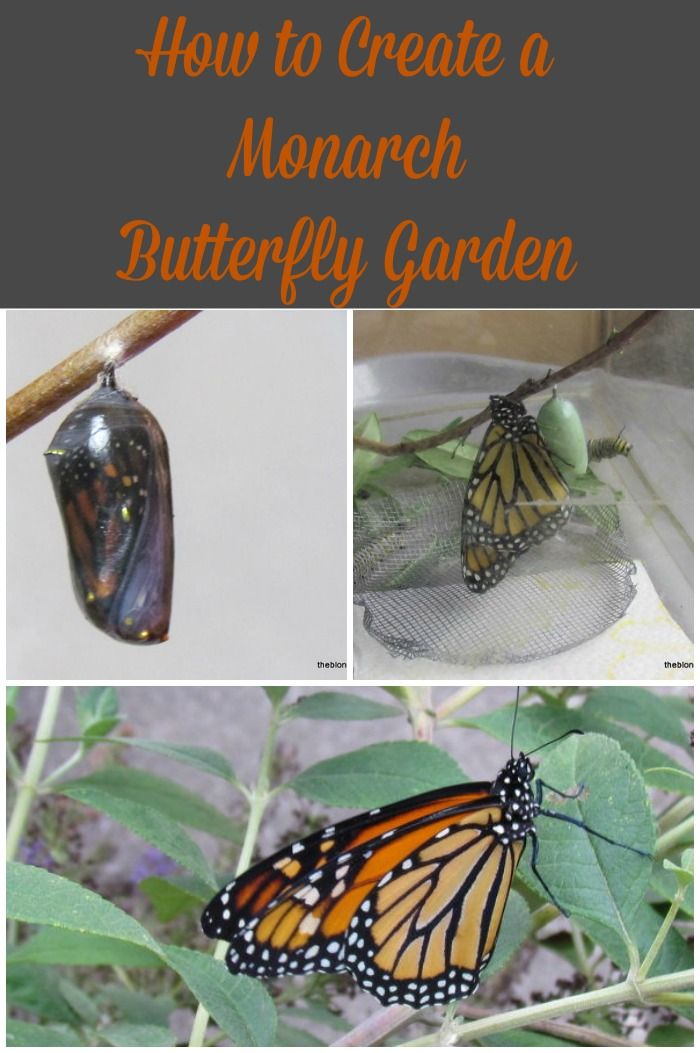 Excellent resource for creating a Monarch Butterfly Garden