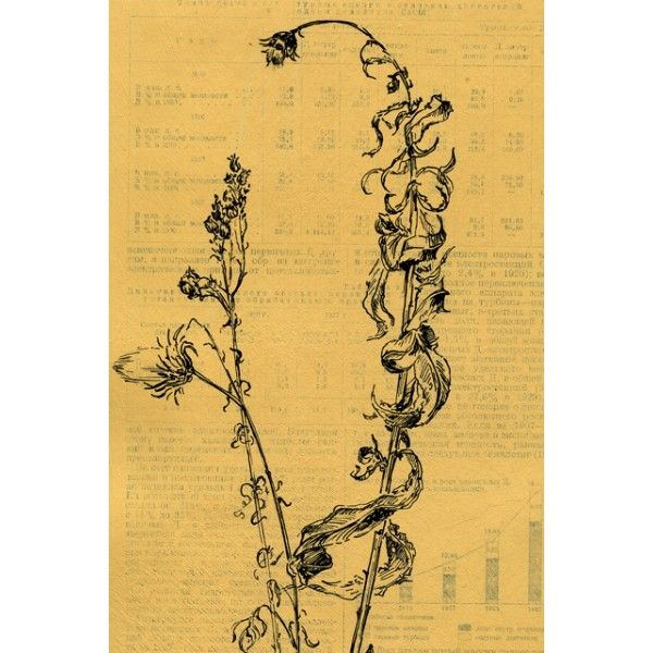 Wilting. Sow thistle - Postcards, Pages of an old encyclopedia