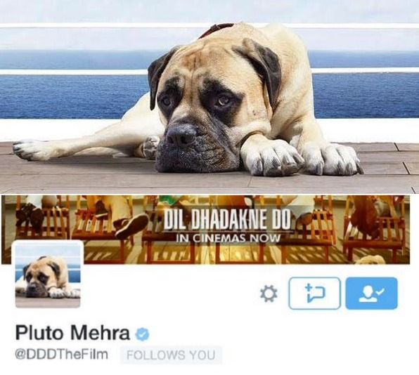 #LatestUp Priyanka Chopra and Ranveer Singh's adorable dog Pluto Mehra from Dil Dhadakne Do joins Twitter! That's right, the entire Mehra clan including Anil Kapoor, Shefali Shah, Priyanka Chopra, Ranveer Sing and Pluto are now on Twitter. Basically, the Twitter page of Dil Dhadakne Do movie has been renamed to form a Twitter handle for Pluto Mehra.
