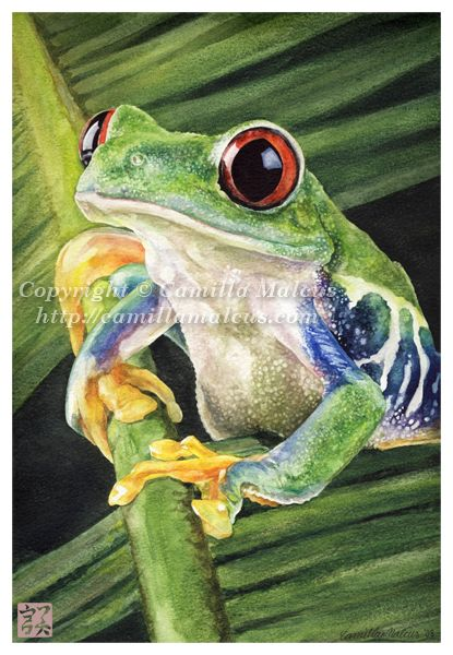 Red-Eyed Tree Frog by CamillaMalcus on DeviantArt