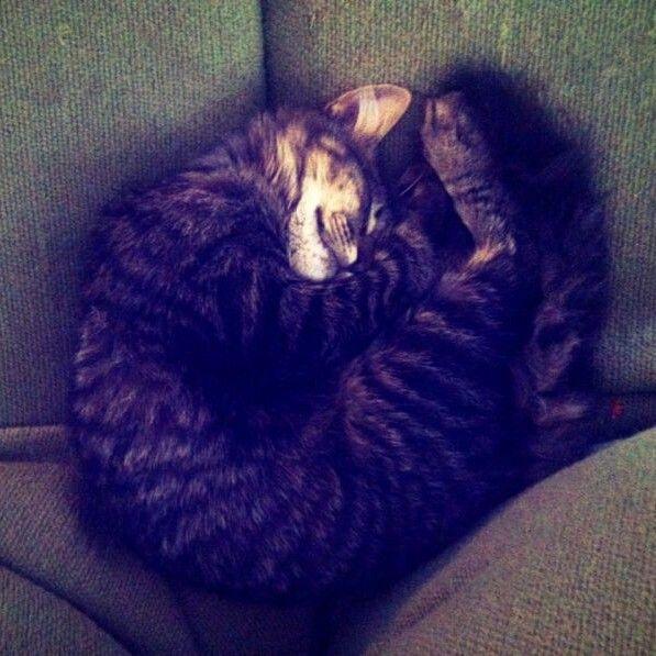 Alonza durmiendo