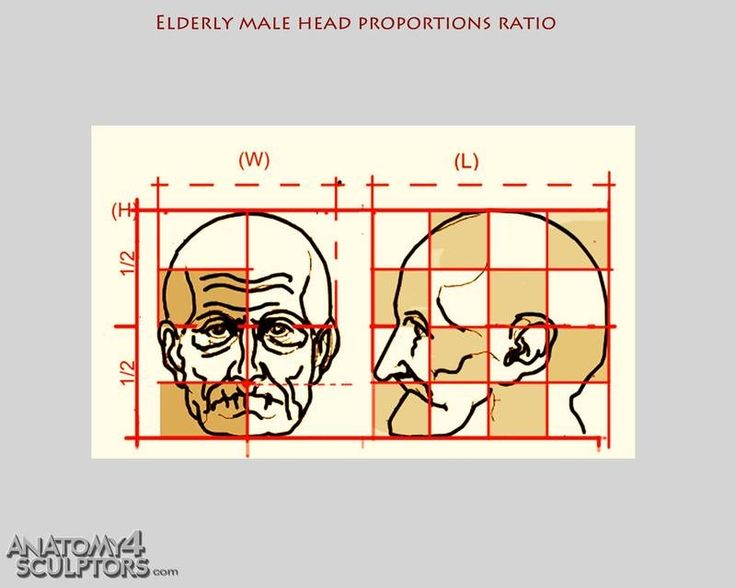 Character Design Proportions : Elderly male head proportions ★ character design