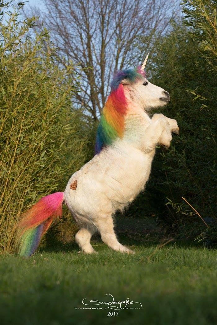 Pummeleinhorn Pferd Humor Niedliche Pferde Und Fohlen