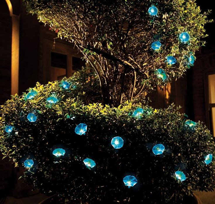 Solar-Powered Morning Glory Lights are a Gorgeous Evening Accent Inspired by the exquisite beauty of morning glory blooms, these lovely solar accent lights add a touch of magic to your evening garden. Powered by the sun, so you can use them anywhere. Ten blue blossoms with white LEDs will glow for about 8 hours on a full charge.
