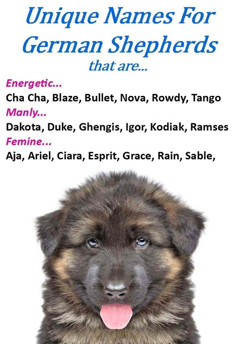 Unique Male Dog Names For German Shepherds