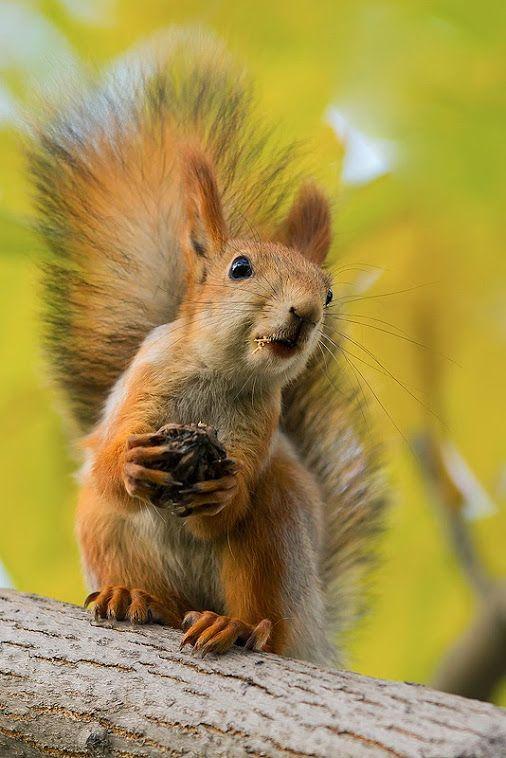 esquilo sem grilo