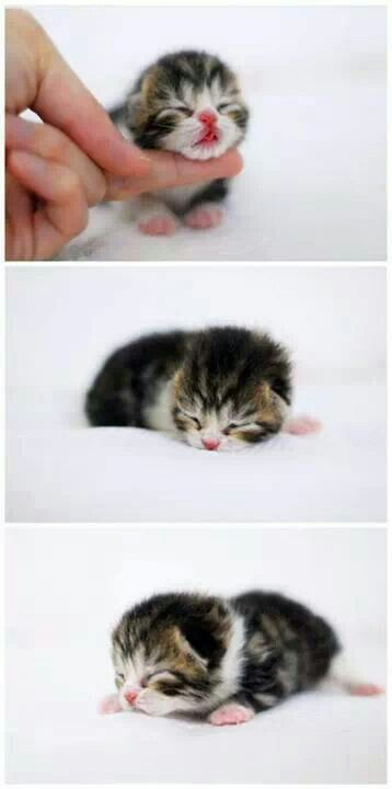 One of my favorite things in the world...a newborn kitten...