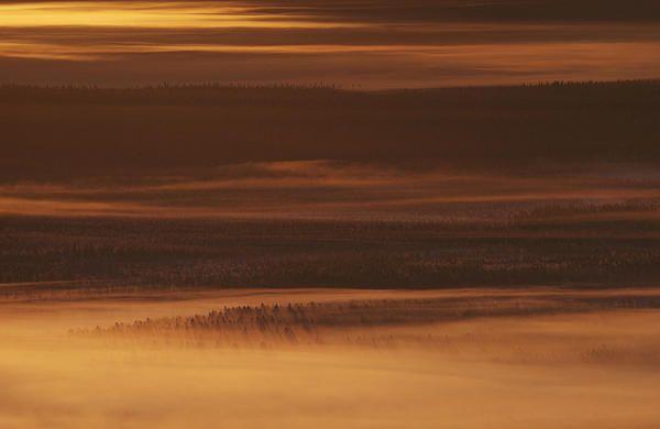Golden foggy landscape in Lapland - prints for sale