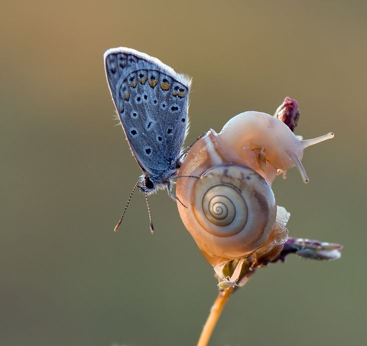 A briliant picture of 3 creatures in nature. Look at the high quality details of the butterfly or the little bug in the bottom side and it's little legs that keeps it up. Also you can see the snail eyes. Through macro photography you can feel the creatures, how they act and also feel their freedom.