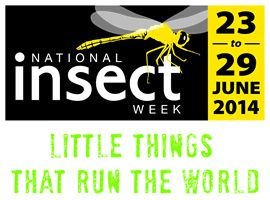 National Insect Week encourages people of all ages to learn more about insects. Every two years, the Royal Entomological Society organises t...